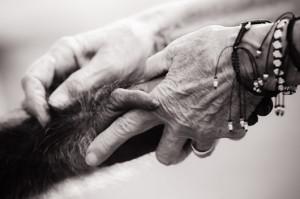 mani animali