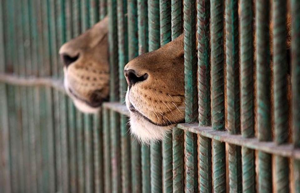 circo animali-2