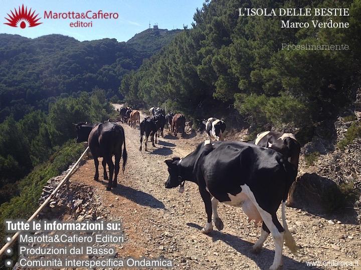 Mucche libro_passeggiata