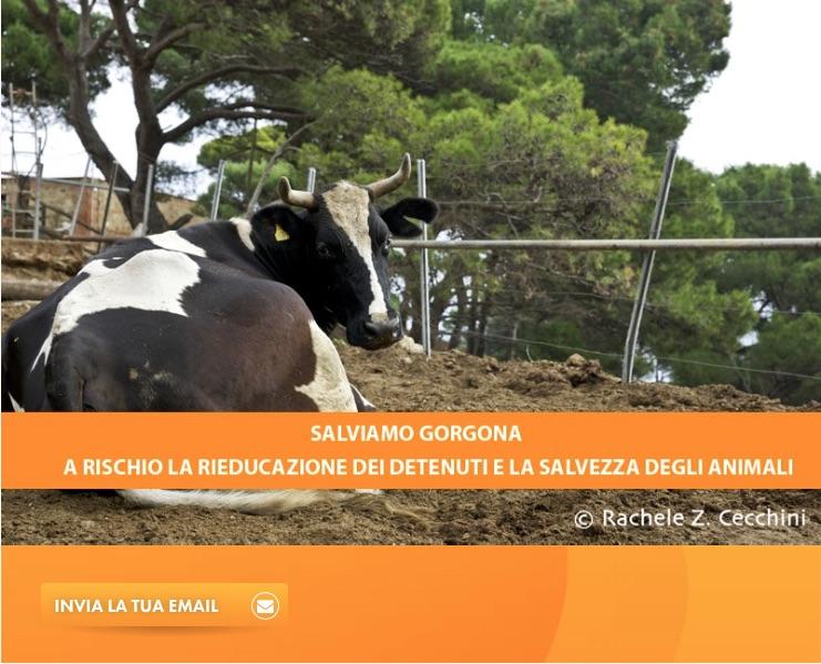 Appello Gorgona_firma
